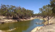 A river flowing between dry, tree-covered banks under a clear blue sky. Photo credit: Milton Hawke  © Broken Hill City Sights and Heritage Tours