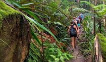 View of bushwalkers trekking along a forest trail enveloped by dense, green rainforest vegetation.  Photo © Byron Bay Adventure Tours