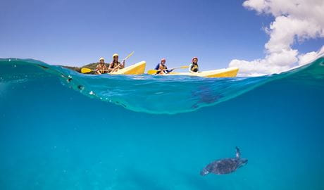 People paddle 2 yellow kayaks over the waves as a sea turtle swims below the surface. Photo © Cape Byron Kayaks