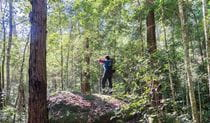 View of a bushwalker with a back pack in forest surrounds. Photo credit: Simone Cottrell © DPIE