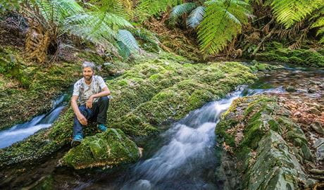 View of a man seated by a stream in a lush rainforest setting with ferns and moss. Photo credit: Dee Kramer © Nature Engagement Tours