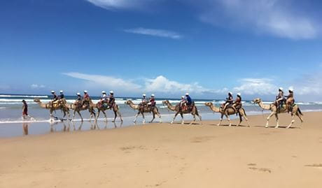 A group of people riding camels along the beach on a guided tour with Oakfield Ranch Camel Rides. Photo © Oakfield Ranch Camel Rides