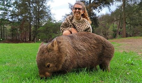 A wombat grazes on a grassy forest clearing in front of a smiling young woman. Photo credit: Dave Fraser © Perfect Day Sydney