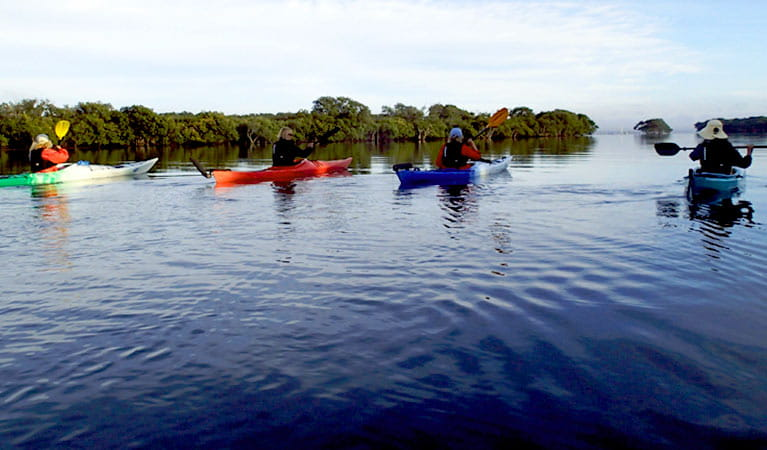 View of 4 paddlers in kayaks crossing a calm lake and bushland along the shores. Photo credit: Glenn MacFadyen © School of Yak