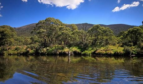 A person fly fishing in Kosciuszko National Park. Photo: Elinor Sheargold/DPIE