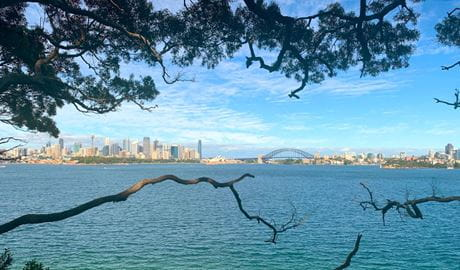 The view of Sydney Harbour through trees on a coastal walk with Urban Walks. Photo: © Urban Walks