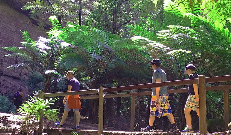 3 people in a tour group cross a wooden bridge set among tall tree ferns and a steep rock face in Wollemi National Park. Photo credit: Kristie Kearney © Wolgan Valley Eco Tours