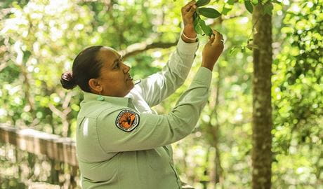 An Indigenous education ranger shares her local cultural knowledge of the rainforest. Photo: Karina Davila-Otoya ©DPIE