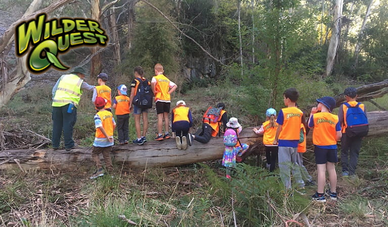Children climbing on a log, helped by a WilderQuest ranger, Kosciuszko National Park. Photo: Nicola Beckett/OEH
