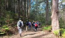 Group of bushwalkers walking through the blue gum forest, Berowra Valley National Park. Photo: Theresa Willsteed/OEH