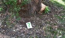 Leafy ground at the base of a tree with a small question mark sign. Photo: Julie Brown/OEH