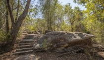 Steps on path through bushland in Brisbane Water National Park. Photo: John Spencer/DPIE