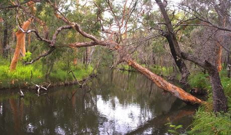 Tiembula Creek, Lake Macquarie State Conservation Area. Photo: Barry Collier