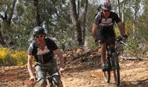 2 men on mountain bikes fiding along a trail in the Pilliga Forest. Photo: Liz Cutts