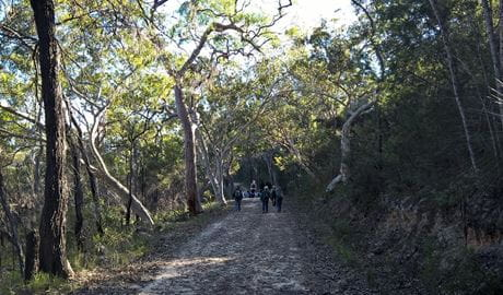 A group of people walking up a track in Muogamarra Nature Reserve. Photo: T Willsteed/OEH.