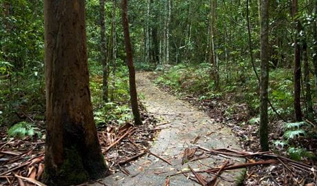 Blue Gum Loop track, Barrington Tops National Park. Photo: John Spencer/OEH