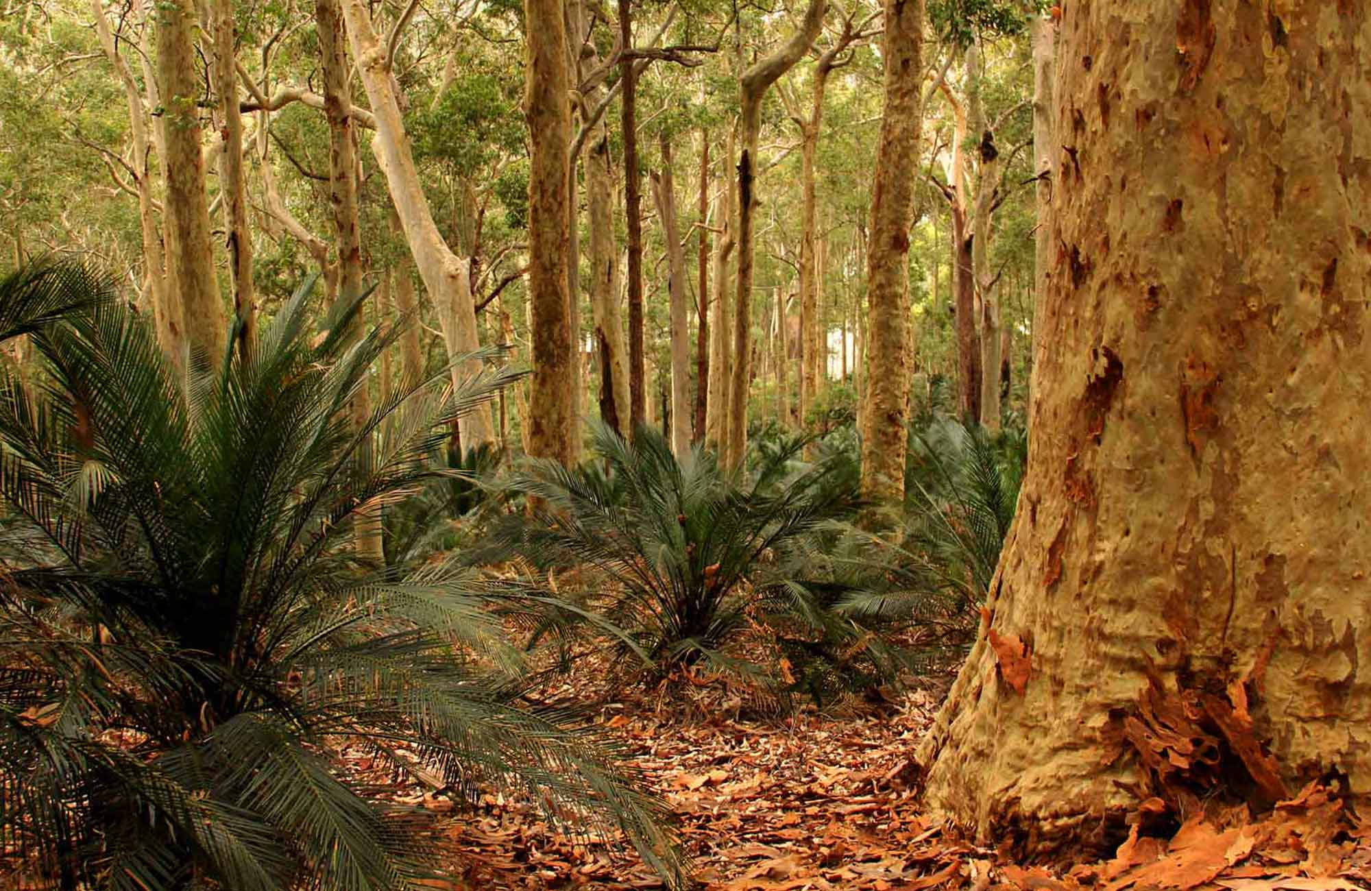 Burrawang Walk in Murramarang National Park. Photo: John Yurasek