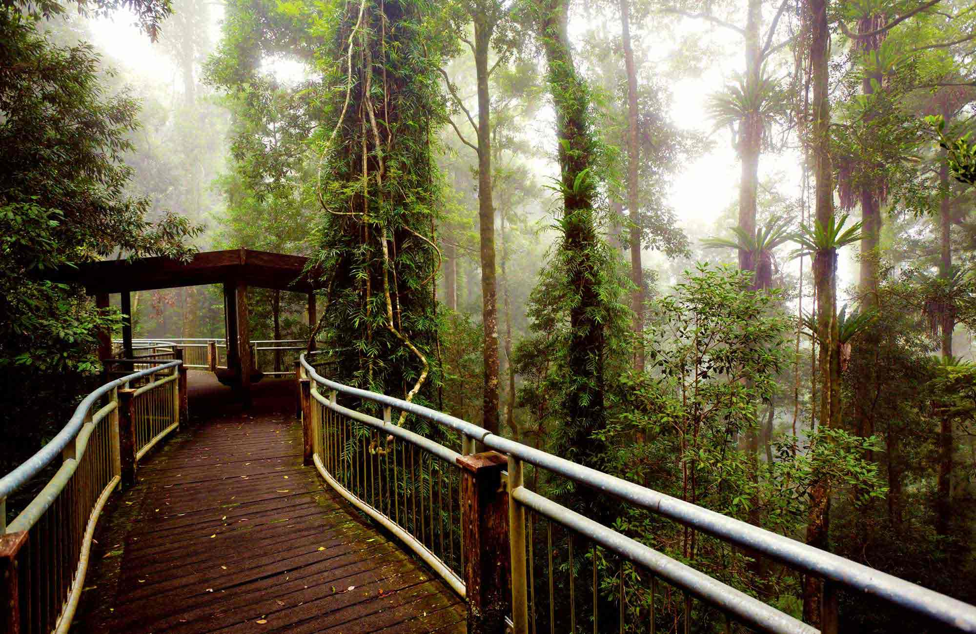 Walk with the birds in Dorrigo National Park. Photo: Rob Cleary