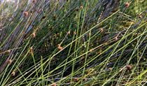 Coastal grass. Photo:Michael Van Ewijk Copyright:NSW Government