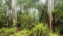 Forest Photo:Michael Van Ewijk Copyright:NSW Government