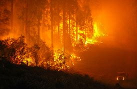 Fire and the Australian bush. Photo: OEH
