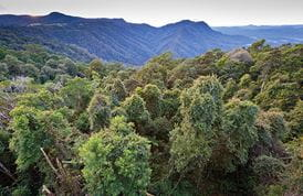 The Skywalk lookout, Dorrigo National Park. Photo: Rob Cleary