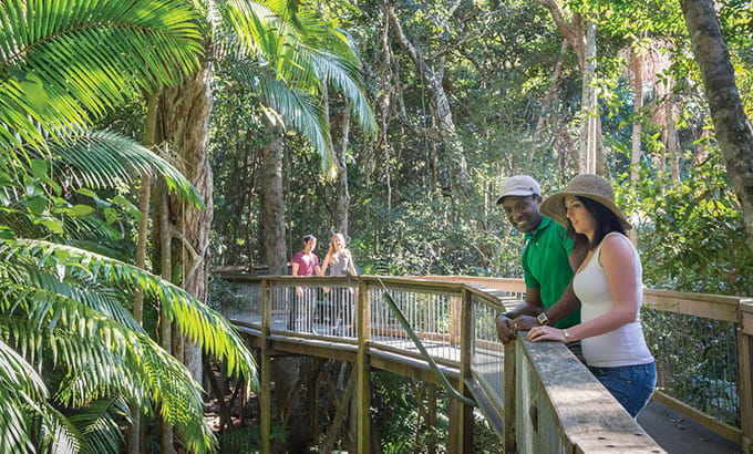 Couples on the wheelchair-accessible Rainforest boardwalk in Sea Acres National Park. Photo: J Spencer/OEH