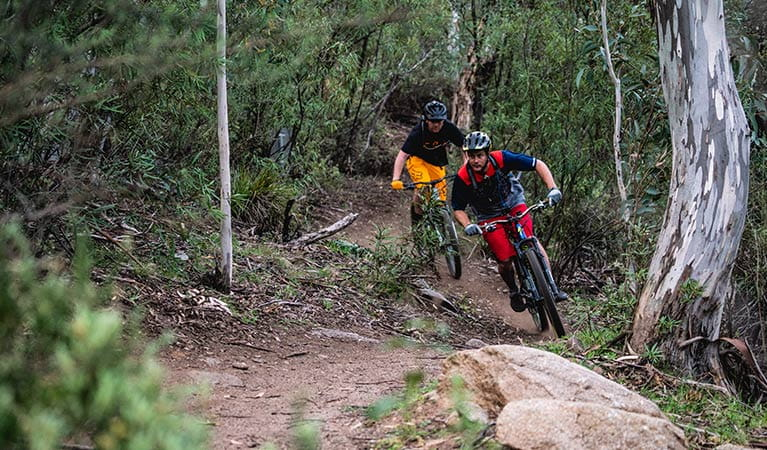 Two mountain bike riders cycle along a winding dirt section of the lower Thredbo Valley track, Kosciuszko National Park. Photo: Robert Mulally/DPIE