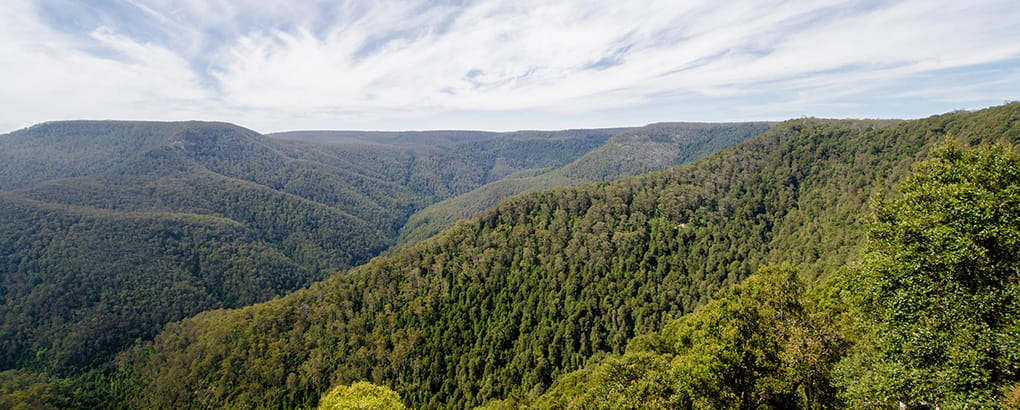 Barrington Tops National Park. Photo: John Spencer