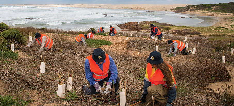 Volunteers plant trees on coastline in Tomaree National Park. Photo: John Spencer/DPIE