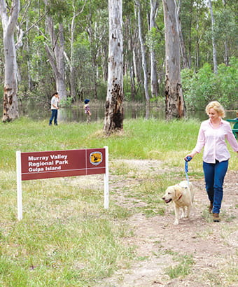 A woman walks a dog on a leash at Gulpa Island picnic area, Murray Valley Regional Park. Photo: David Finnegan © DPIE
