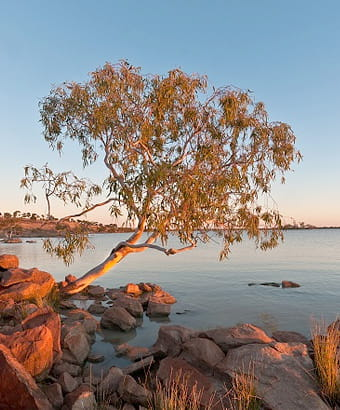 Peery Lake at dawn in Paroo-Darling National Park. Photo: Neal Foster