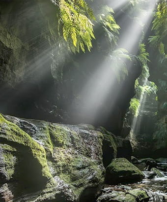 Claustral canyon in Blue Mountains National Park. Photo: Michael Breer