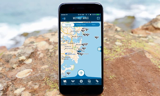 New South Whales whale sightings on Wild About Whales app