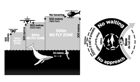 Graphic of whale watching approach zones.  Artwork DPIE