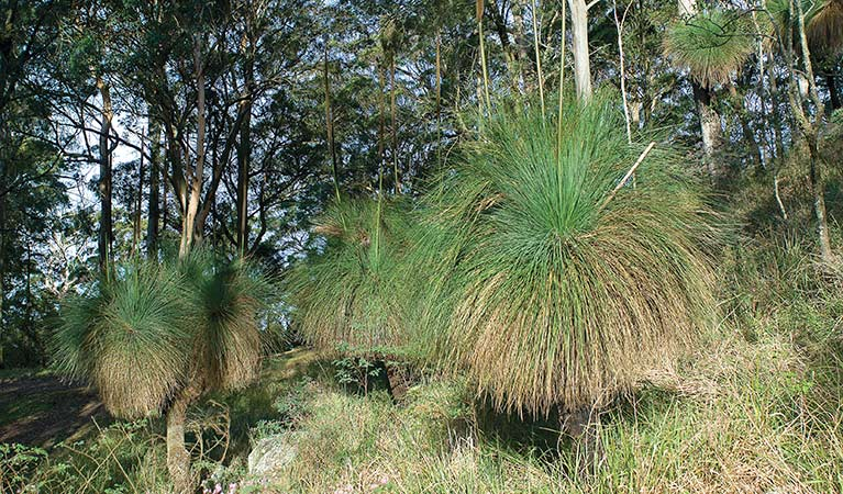 Grass trees, Sugarloaf State Conservation Area. Photo: Michael Van Ewijk