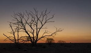Sunset in Sturt National Park, Outback NSW. Photo: John Spencer/OEH