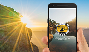 Hand holding a phone with NSW National Parks app on screen. Photo: OEH