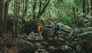 Two men cross a creek bridge on a rainforest walk in Border Ranges National Park. Photo: Branden Bodman/OEH
