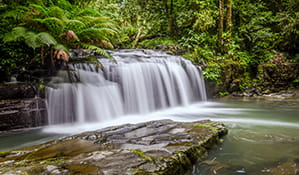 Barrington Falls waterfall cascades into a rainforest creek in Barrington Tops National Park. Photo: John Spencer/OEH
