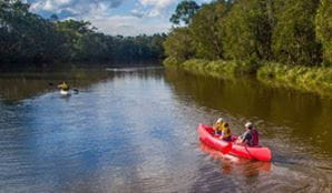 Kayakers paddle along Woody Creek in Everlasting Swamp National Park. Photo: J Robertson/OEH