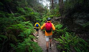 Bushwalkers in Wollemi National Park. Photo: Daniel Tran/DPIE