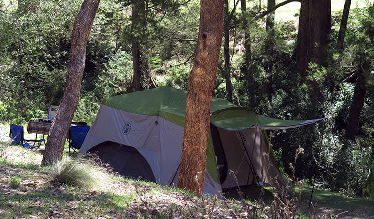 A tent pitched under trees at Abercrombie Caves campground. Photo: Stephen Babka/DPIE