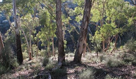 Mt Gray walk, Abercrombie State Conservation Area. Photo: Stephen Babka/NSW Government