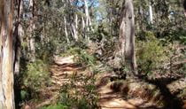 Abercrombie River Trail, Abercrombie National Park. Photo: NSW Government