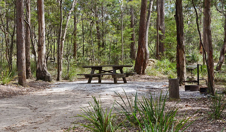 View of barbecue area and picnic table at Bald Rock campground. Photo: Ann Richards