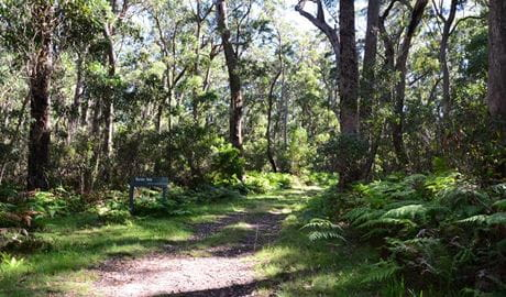 View of Border walk surrounded by lush woodlands, in Bald Rock National Park. Photo: Ann Richards