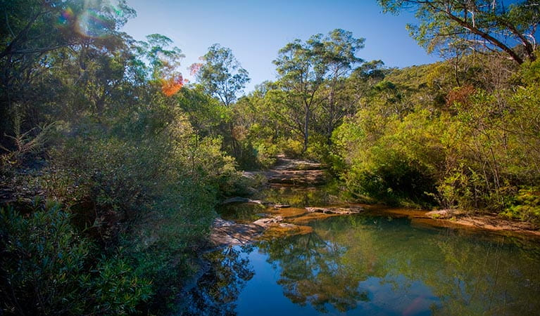 Bargo State Conservation Area. Photo: Nick Cubbin