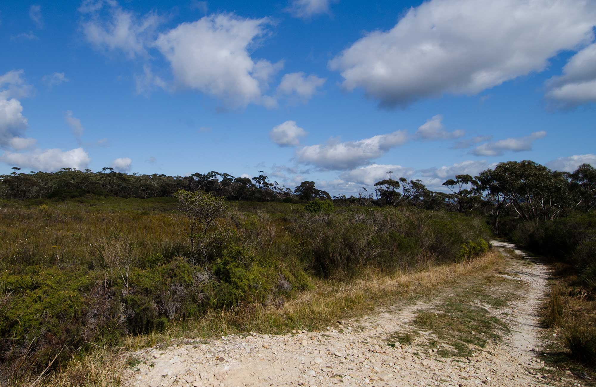 Griffiths trail, Barren Grounds Nature Reserve. Photo: John Spencer/NSW Government