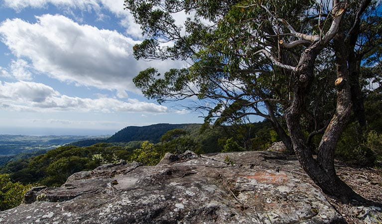 Illawarra lookout walk, Barren Grounds Nature Reserve. Photo: John Spencer/NSW Government